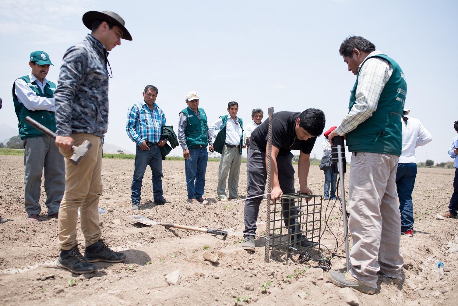"""Proyecto """"PERU SMART AGRO 4.0"""" mejorará la productividad de algodoneros del país"""