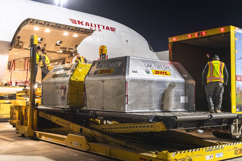 DHL incrementa en 9% su capacidad de carga aérea por charters de arándanos