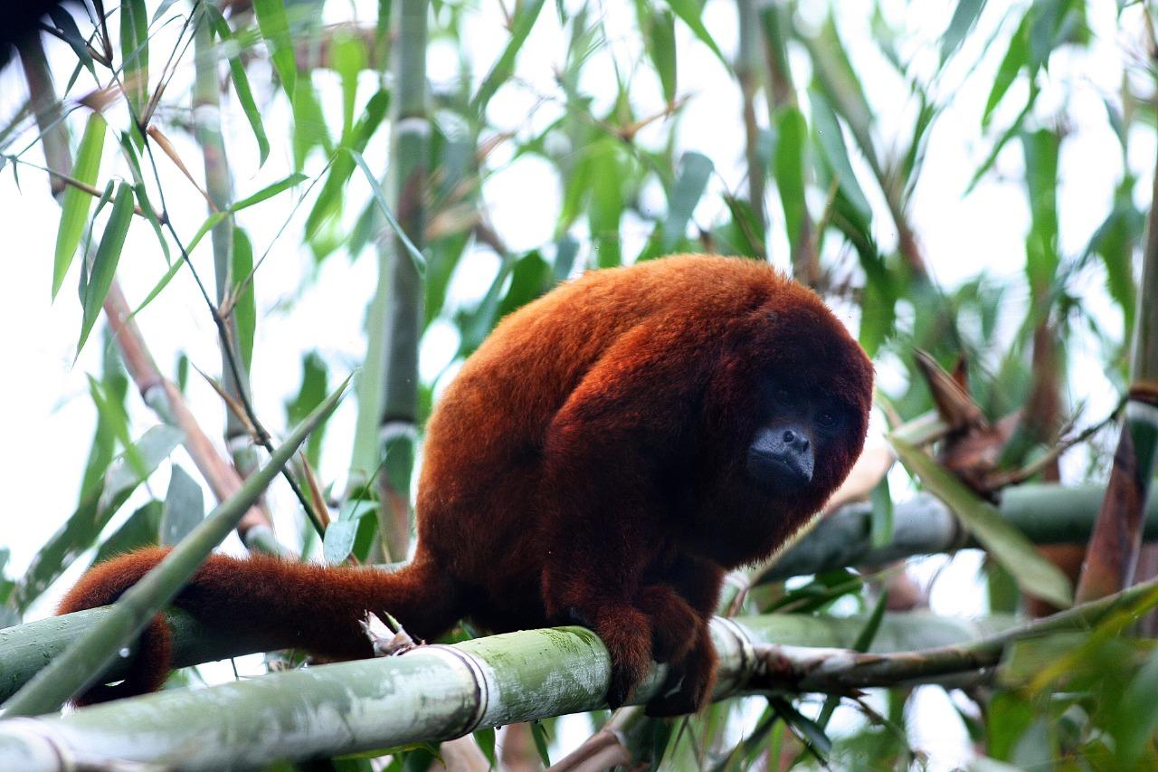 Desde jaguares hasta insectos: más de 2 mil especies son cuidadas en selva de Cusco