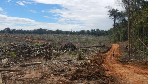 índice de deforestación crecería pese a pandemia