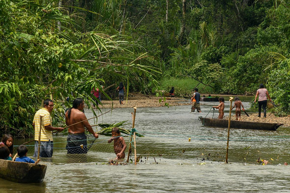 Comerciantes procedentes de Ecuador y Colombia ingresan a territorio peruano para extraer madera de forma ilegal