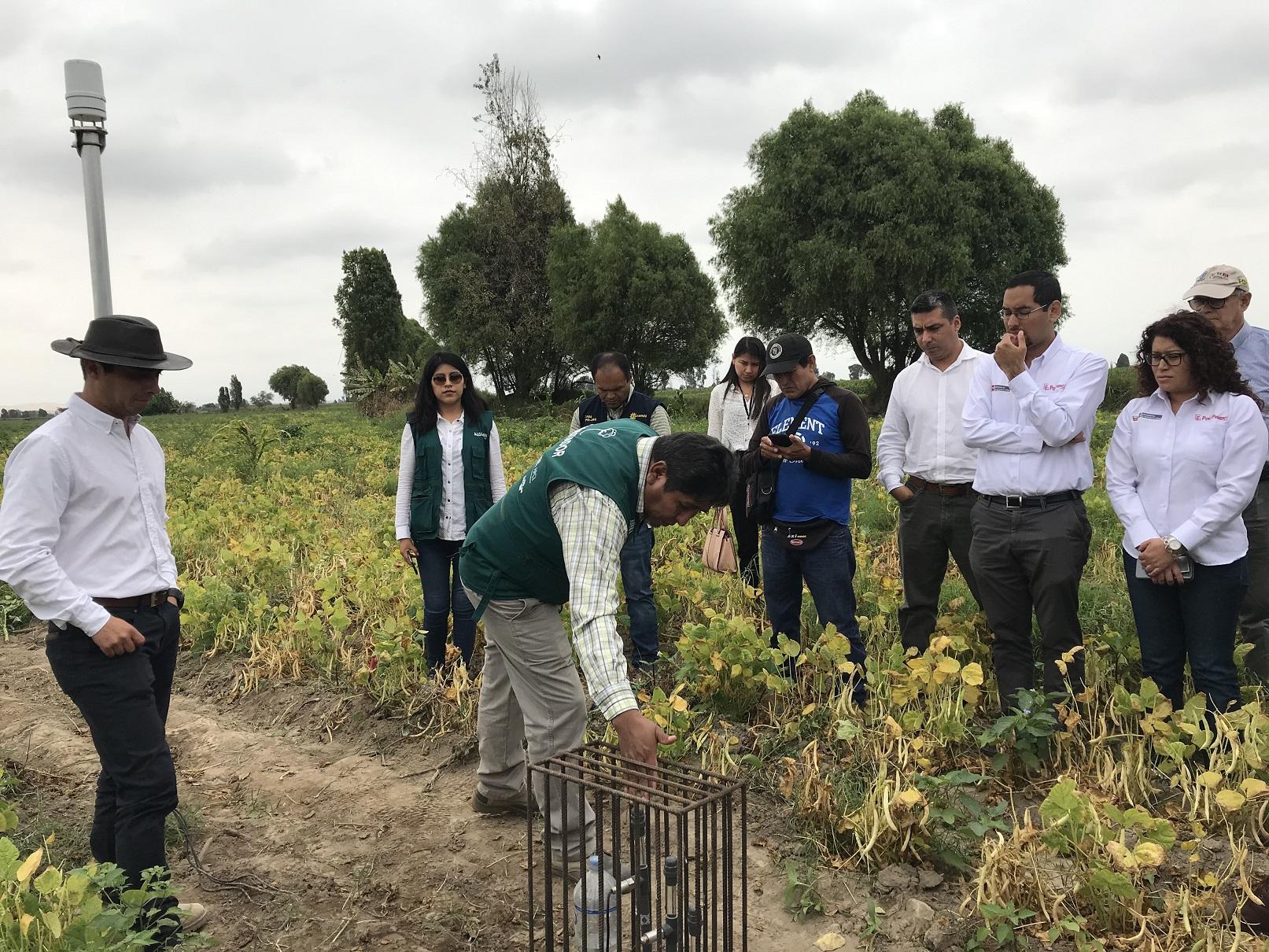 """Productividad de algodoneros de Pisco y Lambayeque aumentó 70% a través del proyecto digital """"Perú Smart Agro 4.0"""""""