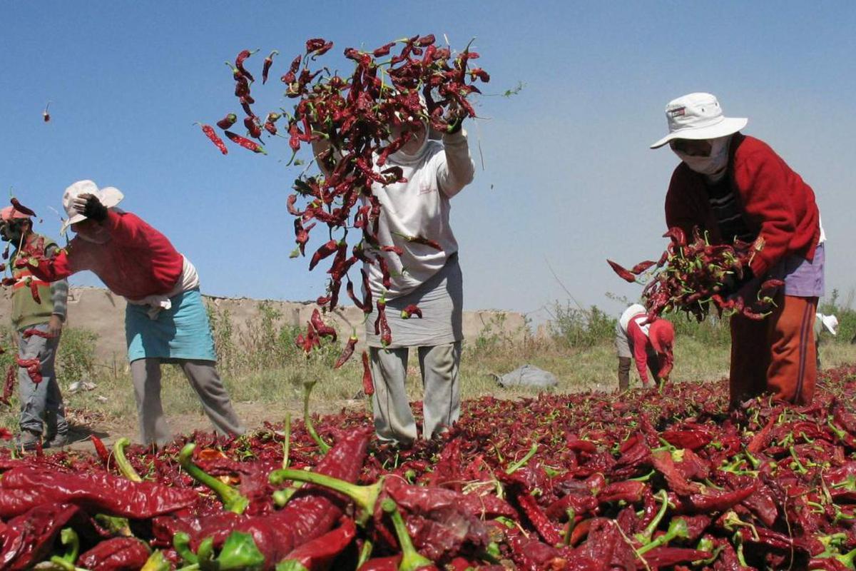 AGAP: Nuevo régimen laboral agrario generará más pobreza, informalidad y desempleo
