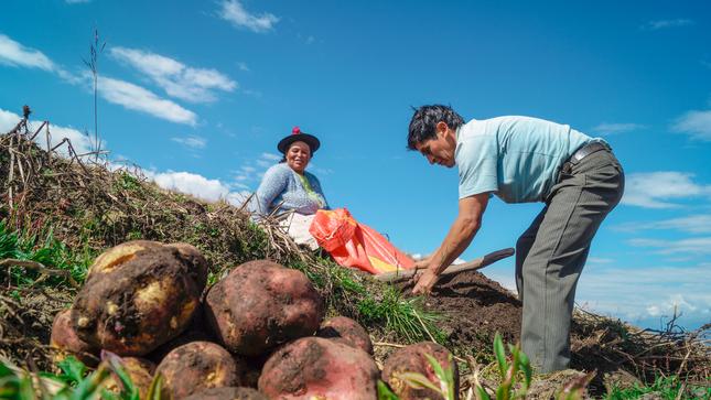 Midagri: gobiernos regionales y locales podrán cofinanciar Planes de Negocio de Agroideas