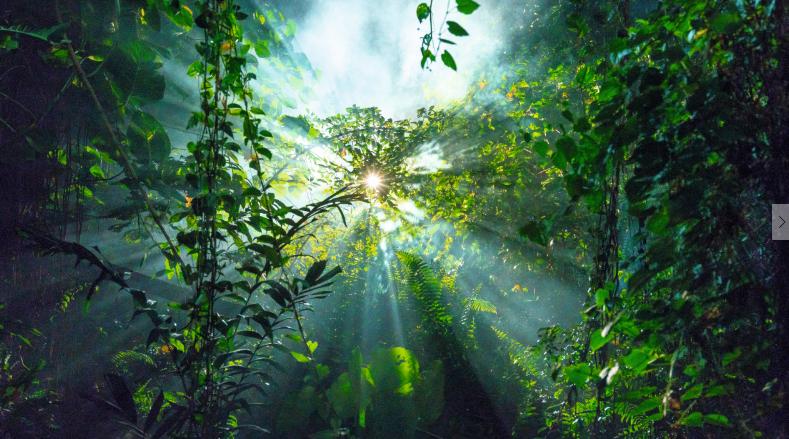 Las 4 claves de Avon hacia un mundo más sustentable