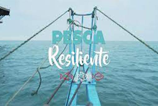 Pesca Resiliente: Conoce a los rostros del Bicentenario del sector pesquero