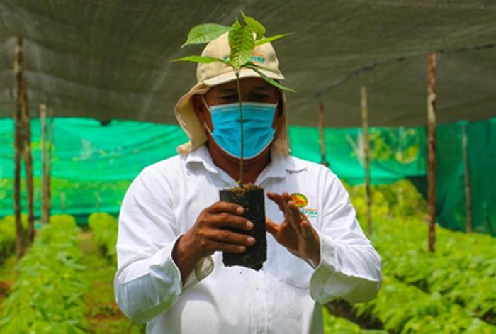 Ucayali: el reto de una cadena de cacao libre de deforestación
